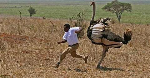 Những hình ảnh cực độc chỉ nhìn thấy ở Châu Phi