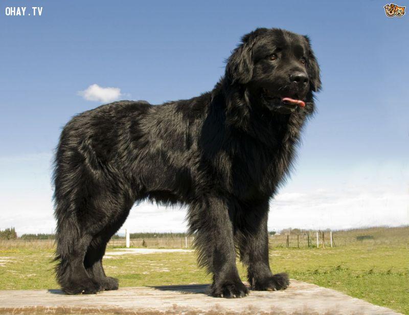 10 giống chó tốt nhất thế giới để bạn nuôi trong nhà