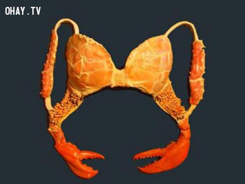 Những kiểu áo ngực độc nhất vô nhị trên thế giới