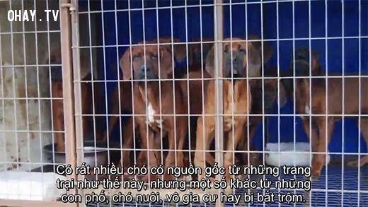 cuộc đời của chó, chó, clip xúc động, rơi nước mắt, người xem