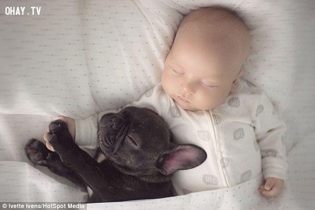 ảnh chó bull pháp,chó dễ thương,chó đáng yêu,chó và em bé,tình bạn