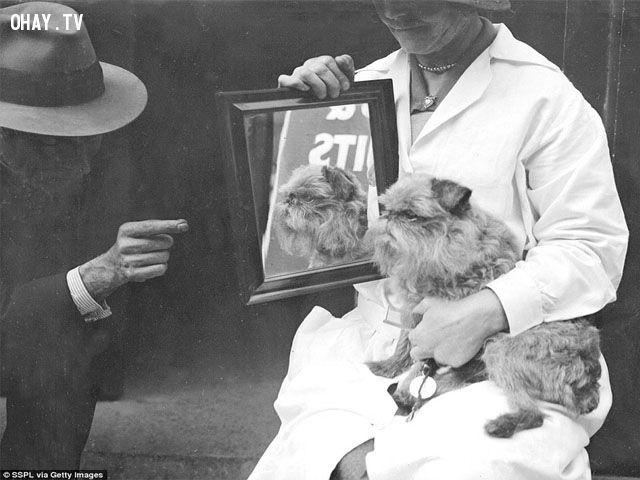 ảnh Chó đẹp,chó dễ thương,chó đáng yêu,mèo dễ thương,chó mèo đáng yêu,tại sao nên nuôi chó,tại sao nên nuôi mèo,lễ hội chó mèo,lễ hội thú cưng,quý tộc