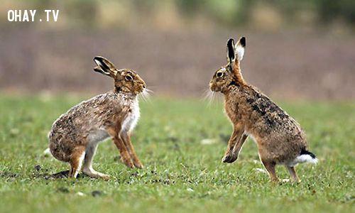 hare1.jpg