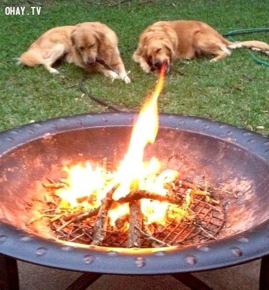 bức ảnh, bức ảnh hài hước, hài hước, loài chó, chó, chụp ảnh,