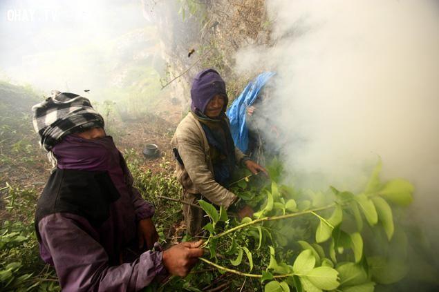 Đốt lửa tạo khói để xua ong ra khỏi tổ