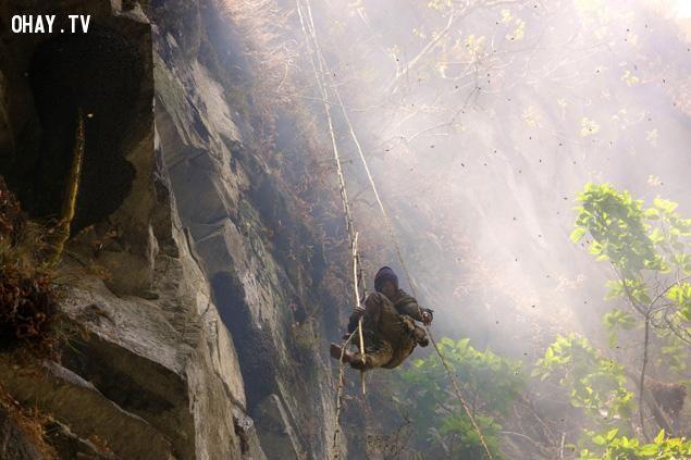 Treo leo vách núi khi lấy mật