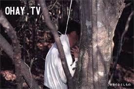 ảnh khu rừng tự sát,tự sát,khu rừng ma quái,nhật bản