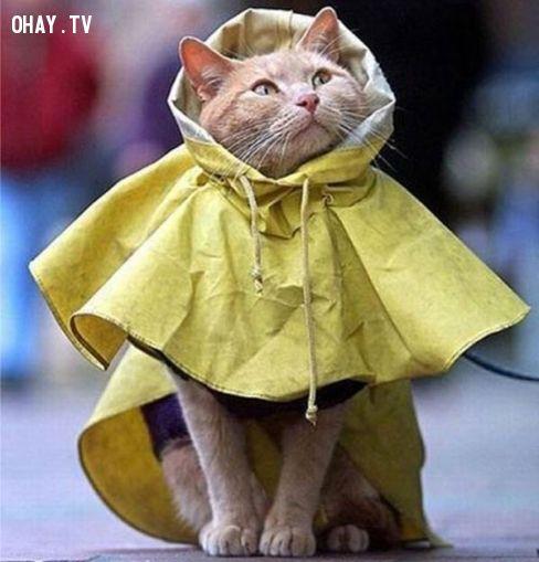 ảnh hài hước mùa mưa lũ