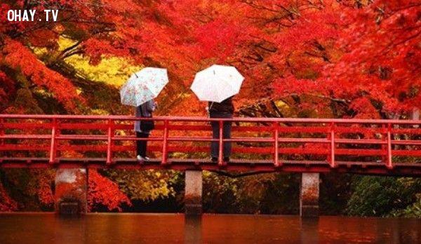 Mùa thu sang, những con đường ở Kyoto chìm trong sắc lá phong đỏ rựcMô tả hình ảnh