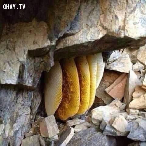 ảnh Nepal,mật ong,thu hoạch mật ong