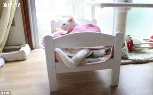 ảnh giường ngủ,thú cưng,giường cho thú cưng