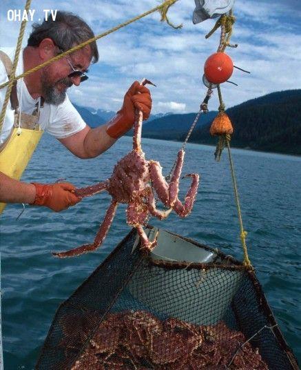 Nghề đánh bắt cua ở Alaska