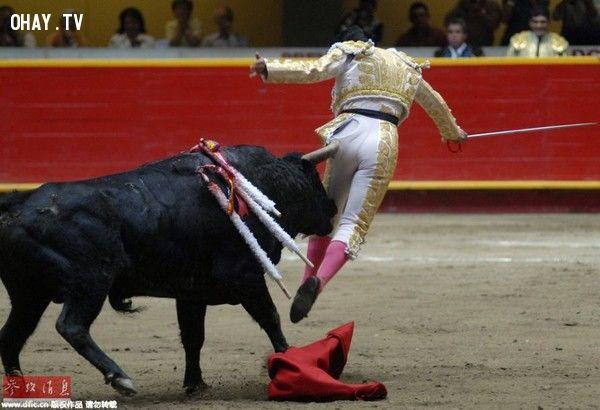Nghề đấu bò