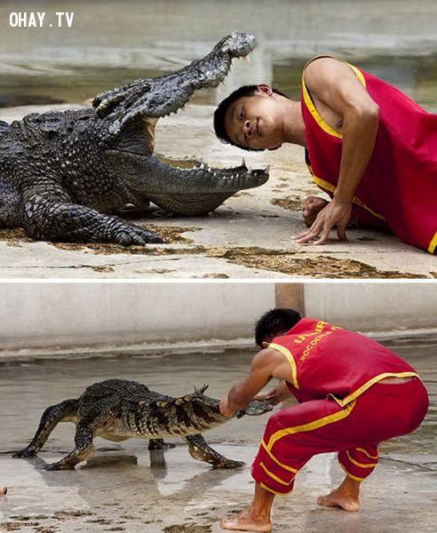 Nghề đấu vật với cá sấu