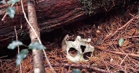 Ghê rợn khu rừng tự sát ma quái nhất Nhật Bản