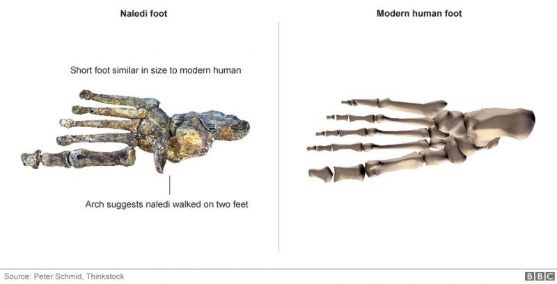 ảnh loài người,sinh vật giống con người