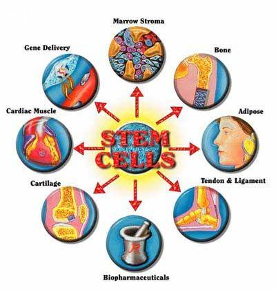 ảnh Tế bào gốc,thẩm mỹ