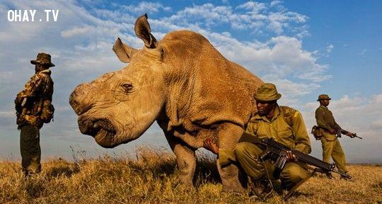 Sudan trong vòng vây bảo vệ. Ảnh: Carters News