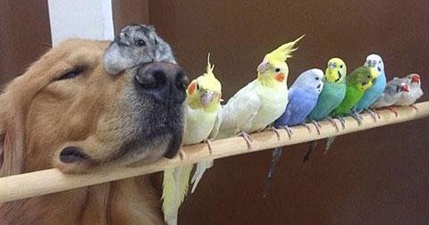Bộ ảnh siêu đáng yêu của chú chó Bob và những người bạn