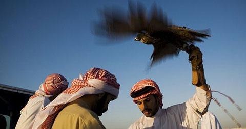 Nghề nuôi chim ưng và thể thao chim ưng