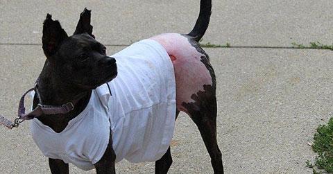 Ngồi tù 18 tháng vì tội thiêu một chú chó