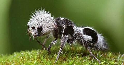 Những sự thật đáng ngạc nhiên và thú vị về động vật có thể bạn chưa biết