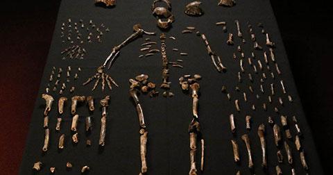 Phát hiện loài sinh vật mới giống con người ở châu Phi