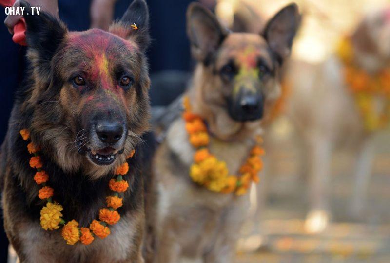 ảnh lễ hội cảm ơn loài chó,tri ân loài chó,ngày hội cho chó,Nepal