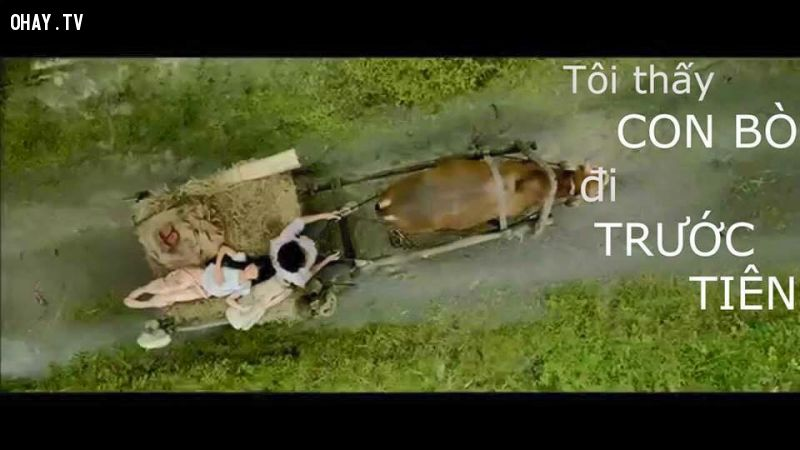 ảnh poster chế,tôi thấy hoa vàng trên cỏ xanh,ảnh chế