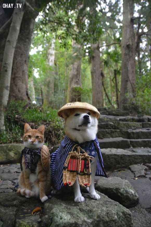 ảnh thú cưng hài hước,chó mèo hài hước,thú cưng