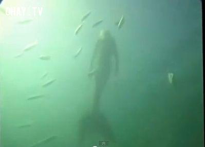 Tháng 9 năm 2011, một người đàn ông bơi lặn tại bãi biển Great Barrier Reef ở Châu Úc đã phát hiện ra một sinh vật giống người cá và đã quay phim lại cảnh tượng ấy. (ảnh cắt từ clip)