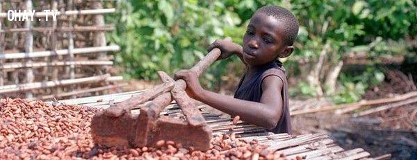ảnh chocolate,socola,có thể bạn chưa biết,bóc lột trẻ em,lạm dụng trẻ em,trẻ em châu phi,lao động trẻ em