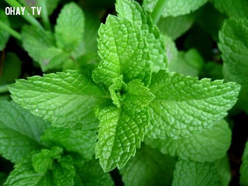 5 loại thảo dược giúp hơi thở luôn thơm mát