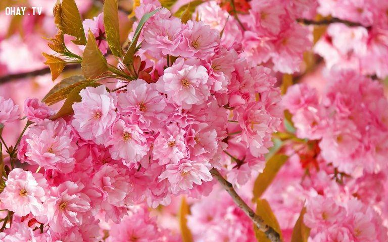 ảnh loài hoa,hoa đẹp nhất thế giới,hoa đẹp,các loại hoa