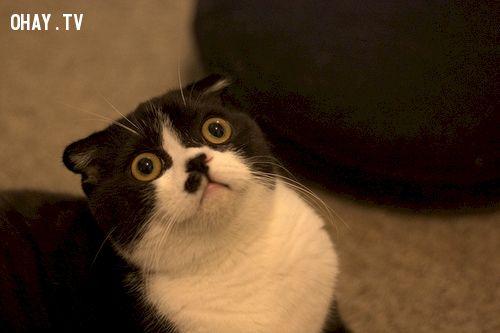 ảnh Mèo,ngộ nghĩnh,bối rối,động vật,vật nuôi