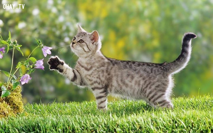 ảnh loài mèo,mèo cưng