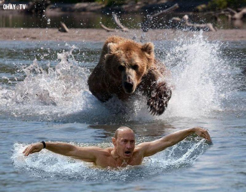 anh-che-Putin 5