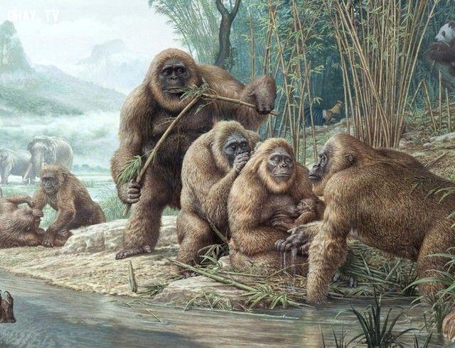 ảnh động vật,loài người tuyệt chủng