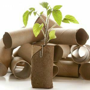 ảnh trồng cây tại nhà,trồng cây