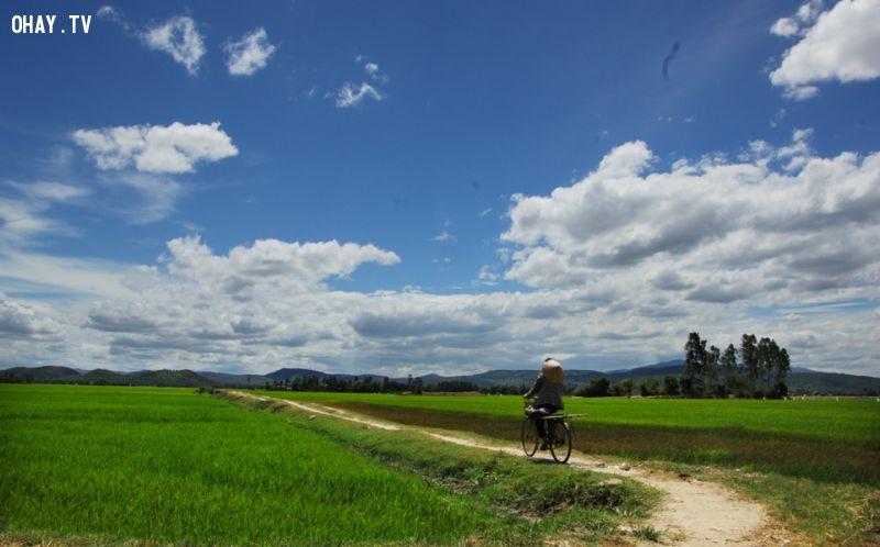 Những con đường gập ghềnh giữa cánh đồng có thể tìm được ở nhiều nơi trên đồng lúa Tuy Hòa