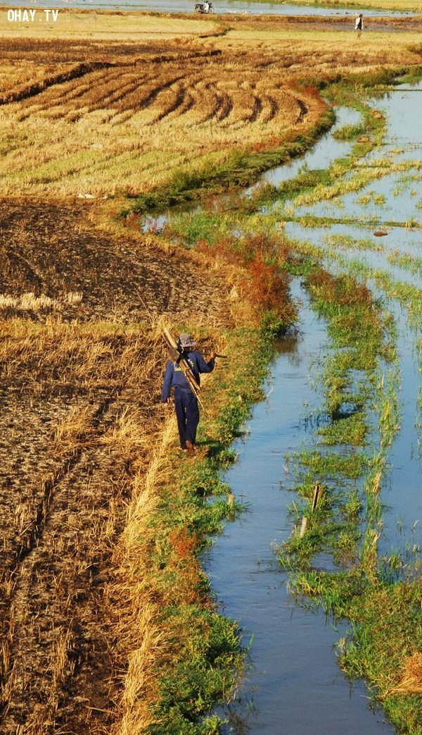 Cuối vụ gặt tại cánh đồng Phước Lộc, huyện Đông Hòa -  Ảnh: Dương Thanh Xuân