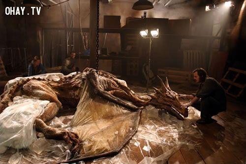 Xác rồng, death body of dragon, xác rồng ở Trung Quốc Miêu Quang Lĩnh