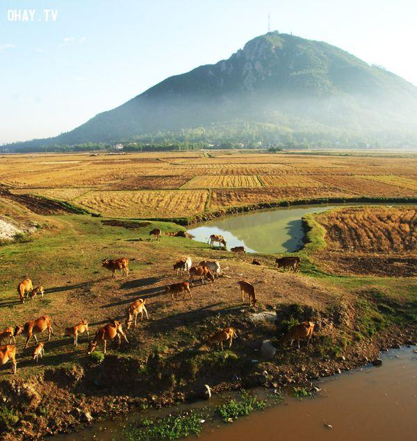 Đồng lúa cuối vụ gặt và phía xa là núi chóp chài (TP Tuy Hòa), nơi đoàn làm phim thực hiện nhiều cảnh quay xúc động - Ảnh: Dương Thanh Xuân