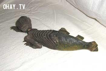 Hóa thạch người cá ở Nhật.