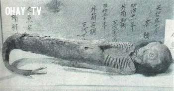 Hóa thạch người cá ở Trung Quốc