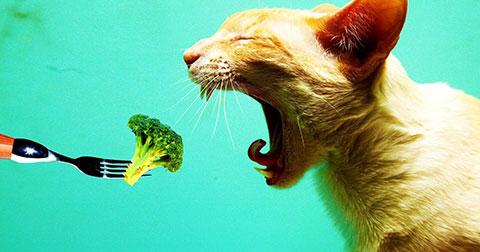 Chuyện gì xảy ra khi bạn không ăn rau xanh nữa?