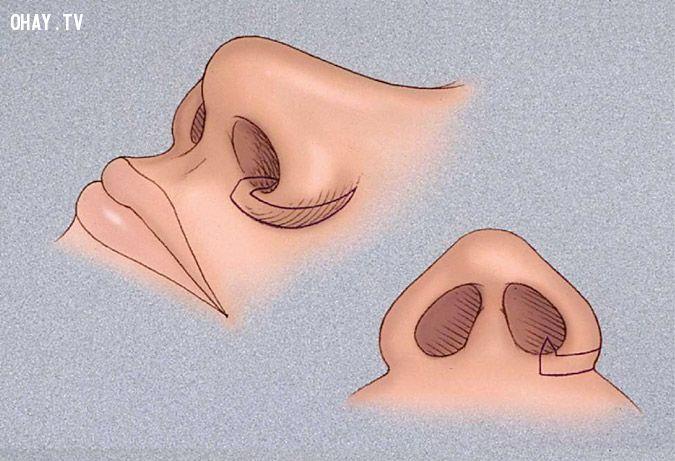 ảnh cơ thể con người,có thể bạn chưa biết,con người,fact