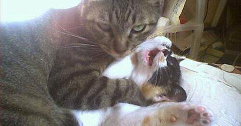 Tôi học được gì từ loài mèo?