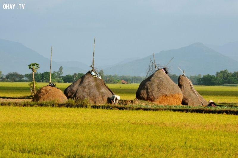 Giữa Đồng Thuộc Thôn Phước Lộc (Xã Hòa Thành, Huyện Đông Hòa) -