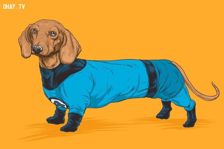 ảnh siêu anh hùng,chó cưng,cún cưng,động vật hài hước